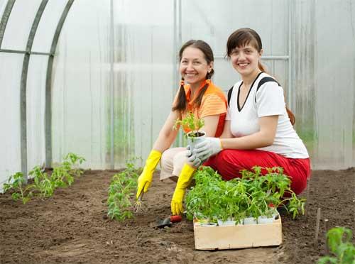 Подготовка теплицы к выращиванию рассады